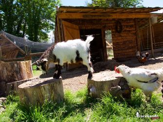 Mini parc animalier - Camping d'Aleth